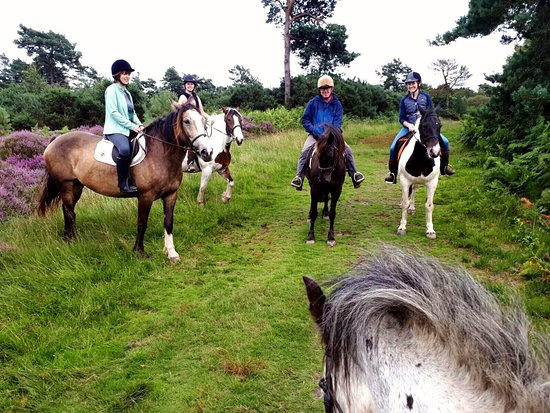 Ashdown Forest Riding Centre