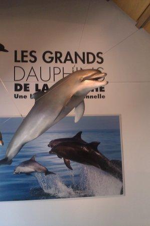 expo sur les grands dauphins
