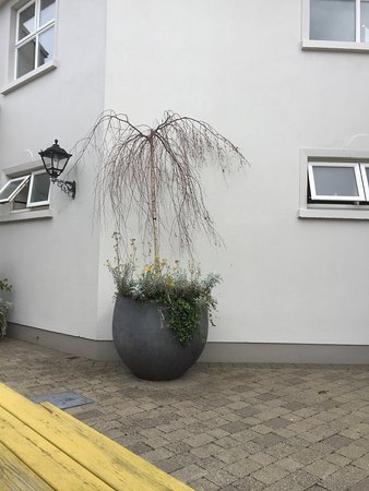 Ennis, Irland: Needed some serious tlc, including dead trees in pots, just not a 4 star hotel?
