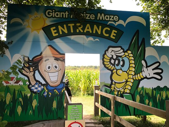 Turners Hill, UK: Love the Giant Maize Maze! Changes every year and is never predictable :)