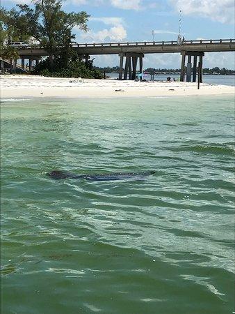 Bradenton Beach, فلوريدا: photo0.jpg