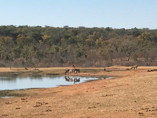 Hwange National Park, Zimbabwe: photo3.jpg