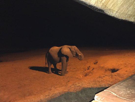 Hwange National Park, Zimbabwe: photo5.jpg