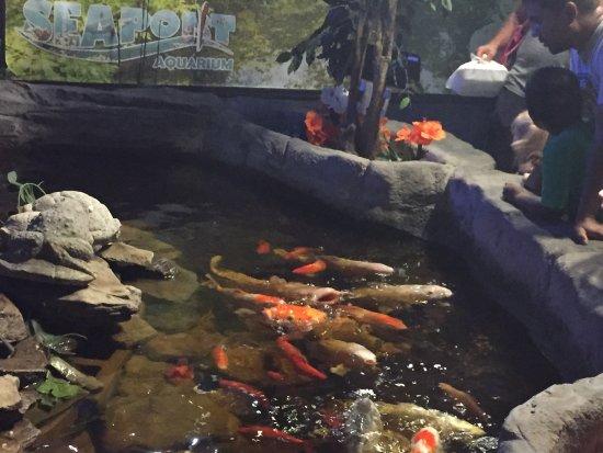 Seaport Aquarium: Nice pond