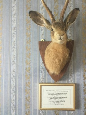 Dungallan Country House: The Killer Rabbit