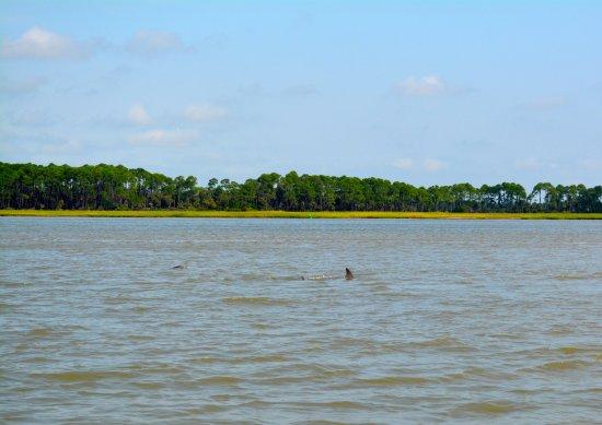 Folly Beach, SC: Pod of dolphins