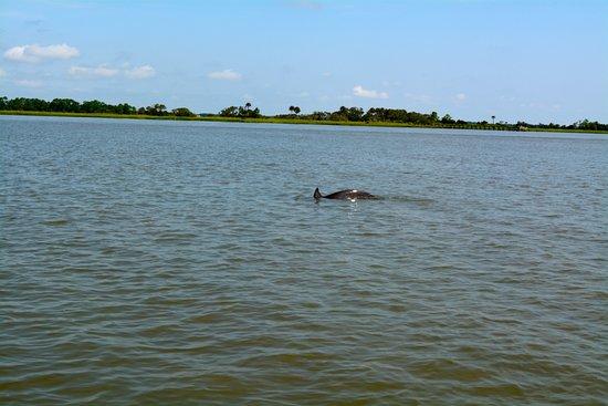Folly Beach, SC: Dolphin