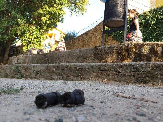 Casas Del Monte, Spain: Cacas de perro por todos los lados