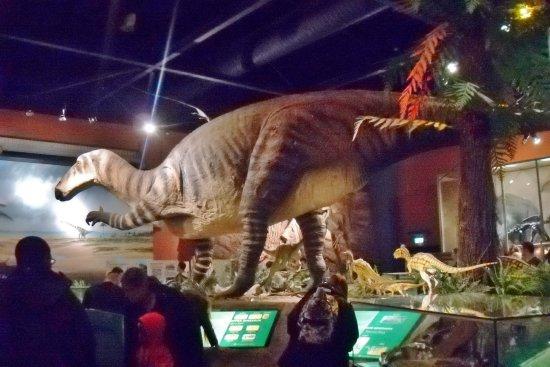 Type Specimen Fossils Mounted With Fibregl Replicas At Dinosaur Isle Museum
