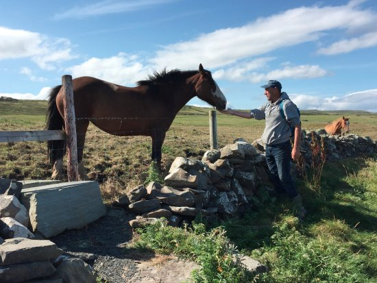 Doolin, Ireland: Pat with one of his horses