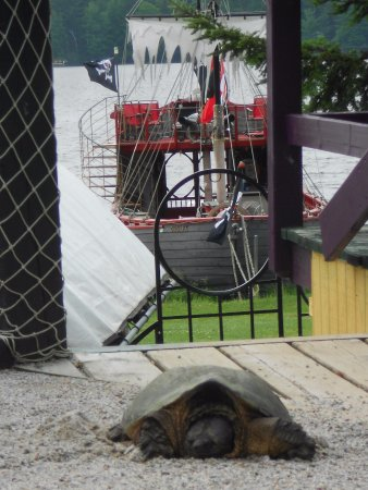 Eagle River, WI: Morning visitor. Even snapping turtles can't resist stopping in for some Cedar Crest Ice Cream!