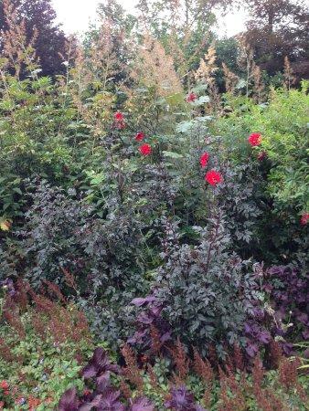 Washington, CT: Beautiful Dahlias!