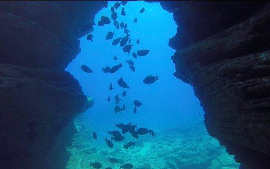 โคเลา, ฮาวาย: Fish from Niihau