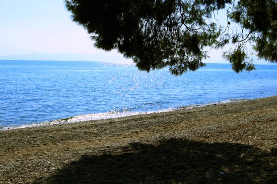 Rovies, Grecia: we were sitting under the shadow of a big pine tree enjoying a great burger next to the sea.