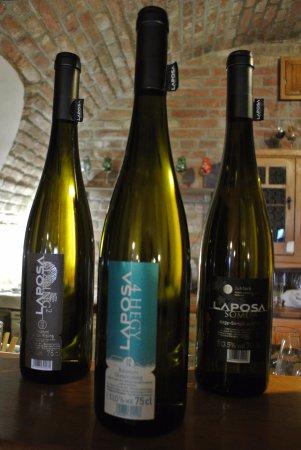 Badacsonytomaj, Ungarn: Tadım yaptığımız beyaz şaraplar