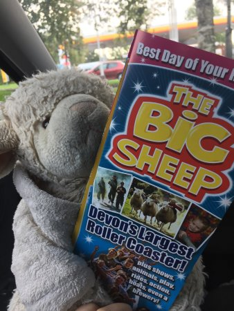 Bideford, UK: We took our Sheepy and it was a great day out! There were sheep shows and duck trails where a do