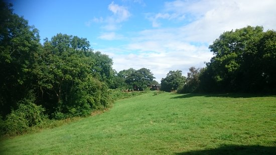 Langport, UK: DSC_1484_large.jpg