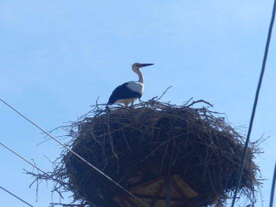 Sibiel, Romania: Una cicogna vicino al museo