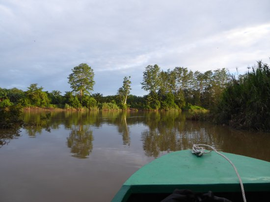 Kinabatangan District, Malasia: View of the boat while cruising the river