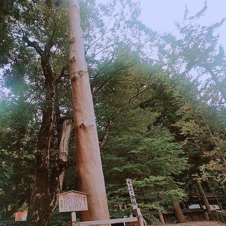 Suwa Shrine: 2017-08-11-13-41-44_large.jpg