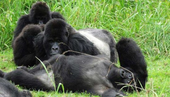 Gorilla and Adventure Safaris