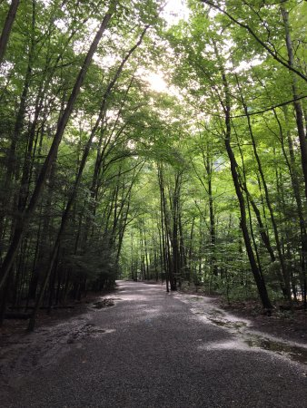 Trumansburg, Estado de Nueva York: Gorge trail