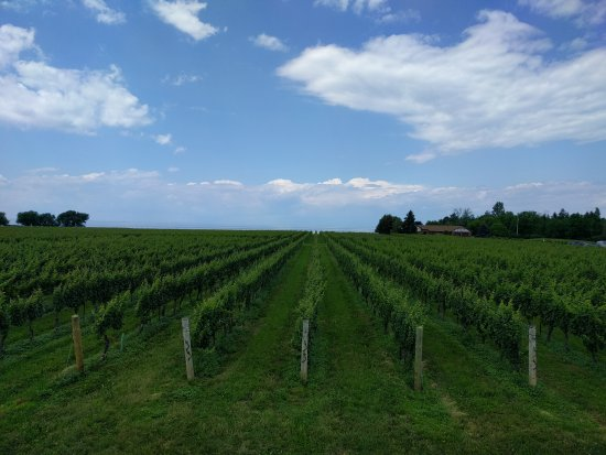 Konzelmann Estate Winery: IMG_20170702_134755_large.jpg