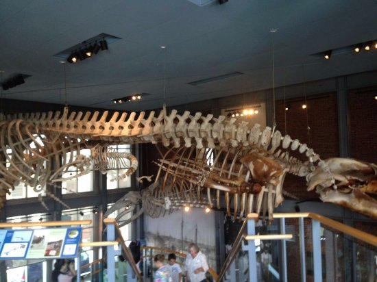 New Bedford, MA: Whaling Museum