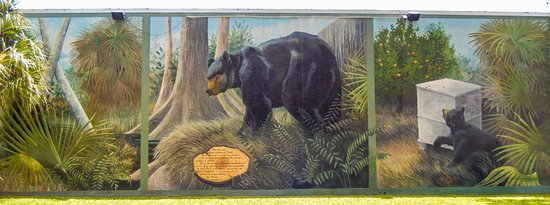Lake Placid, FL: the lost bear cub