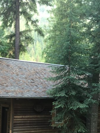 Lumby, Canada: Moose Cabin