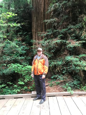 Mill Valley, CA: Visual tfor perspective on size of trees