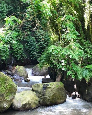 Nandini Bali Jungle Resort & Spa: photo0.jpg