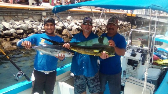 Sushi Time Sport Fishing: This is the largest dorado and yellow fin we caught.