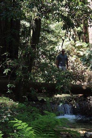 Felton, Kaliforniya: Fall Creek hike