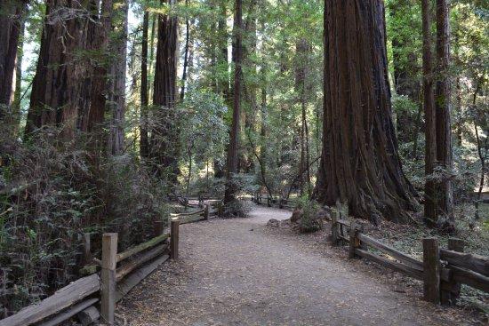 Felton, Kaliforniya: Henry Cowell Redwoods