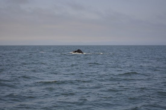 Moss Landing, Californië: Whale watching