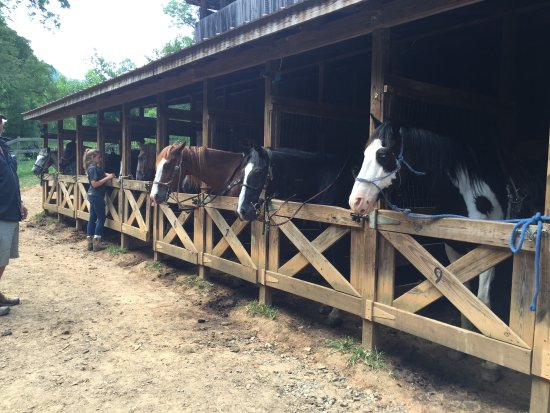 Marshall, NC: Some of the horses available