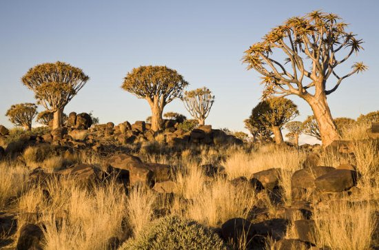 14-Day Namibia Highlights from ...