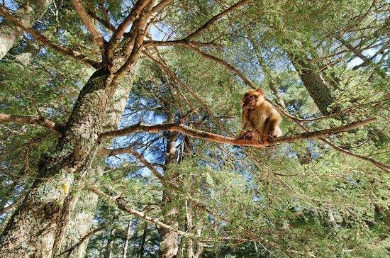 Cordilheira do Atlas e Floresta dos...