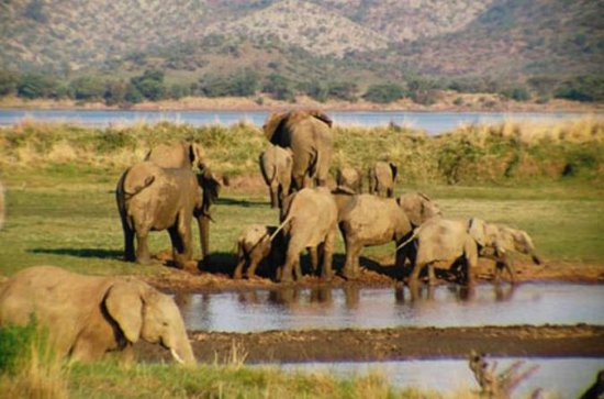 Pilanesberg National Park Safari from...