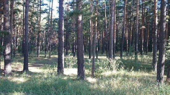 Zerenda, Kazakhstan: Зеренда