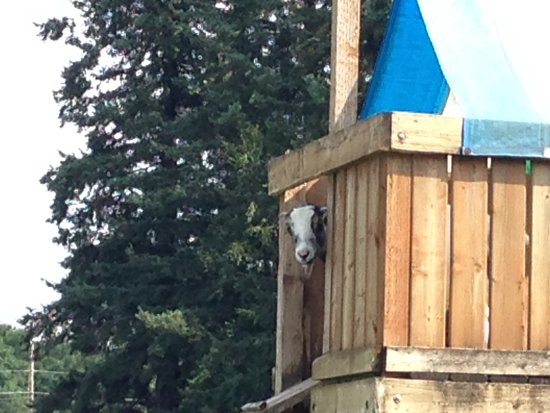 "Ferndale, WA: King of the hill.  ""I'm not coming down unless I see treats!"""