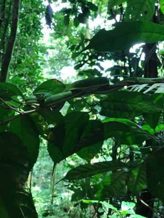 Reserva Curi-Cancha: photo4.jpg