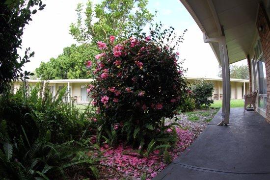 Raymond Terrace, Australia: garden view