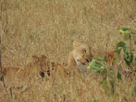 Tarangire National Park, Tanzania: Family feast