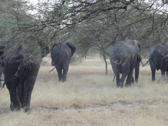 Tarangire National Park, Tanzania: Farewell from the elephants as we left the park