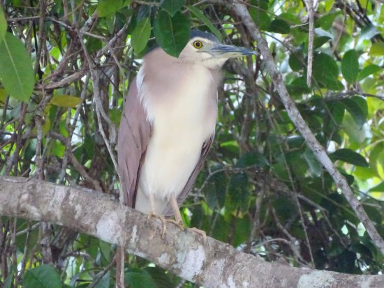 Daintree, Australia: One of many birds we saw at night