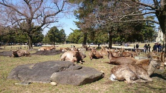 Ichihara, Japón: Rusa di Nara Park