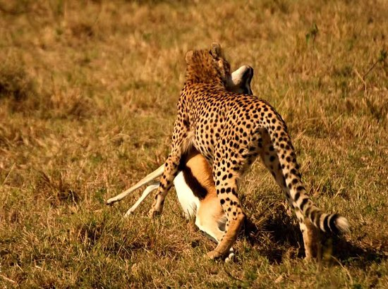 Royal Mara Safari Lodge: photo1.jpg