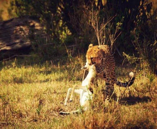 Royal Mara Safari Lodge: photo2.jpg